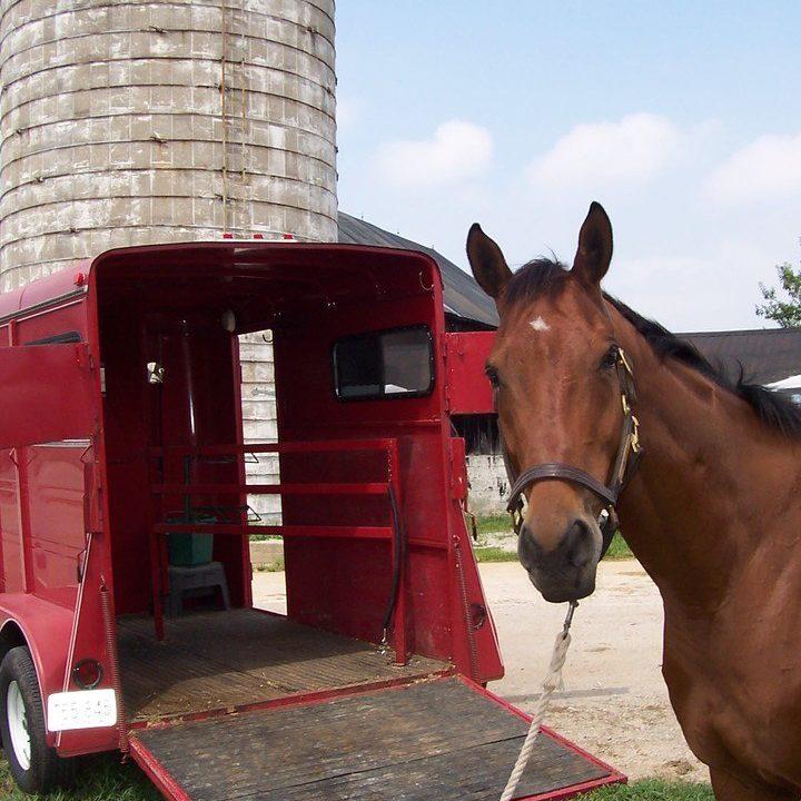Horse Transport 2